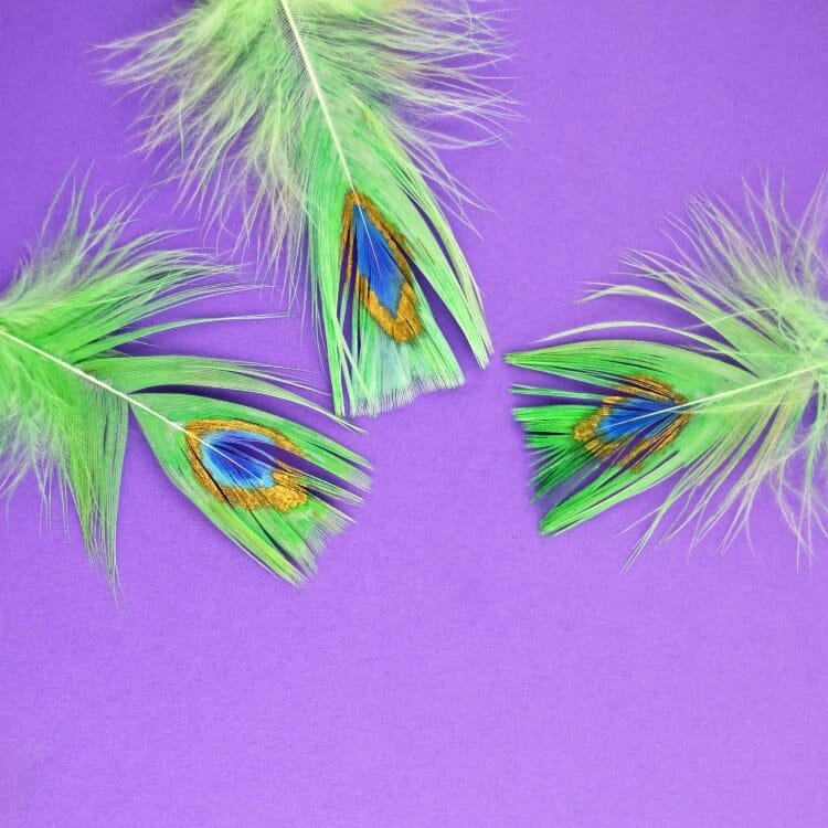 How to Paint Peacock Feathers with Paint Pens