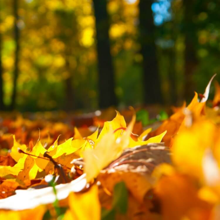 brightly colored leaves on the ground in a fall forest