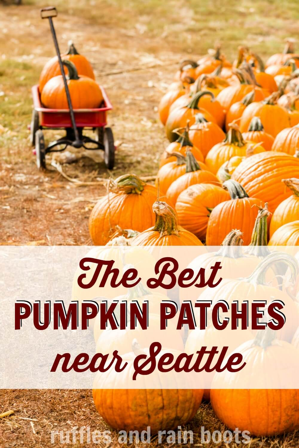 pile of pumpkins next to a red wagon with text which reads the best pumpkin patches near Seattle WA