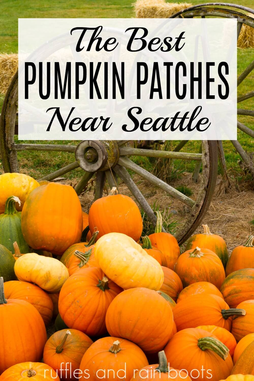 farm with pile of princess pumpkins and pumpkins for carving with text which reads the best pumpkin patches near Seattle Washington