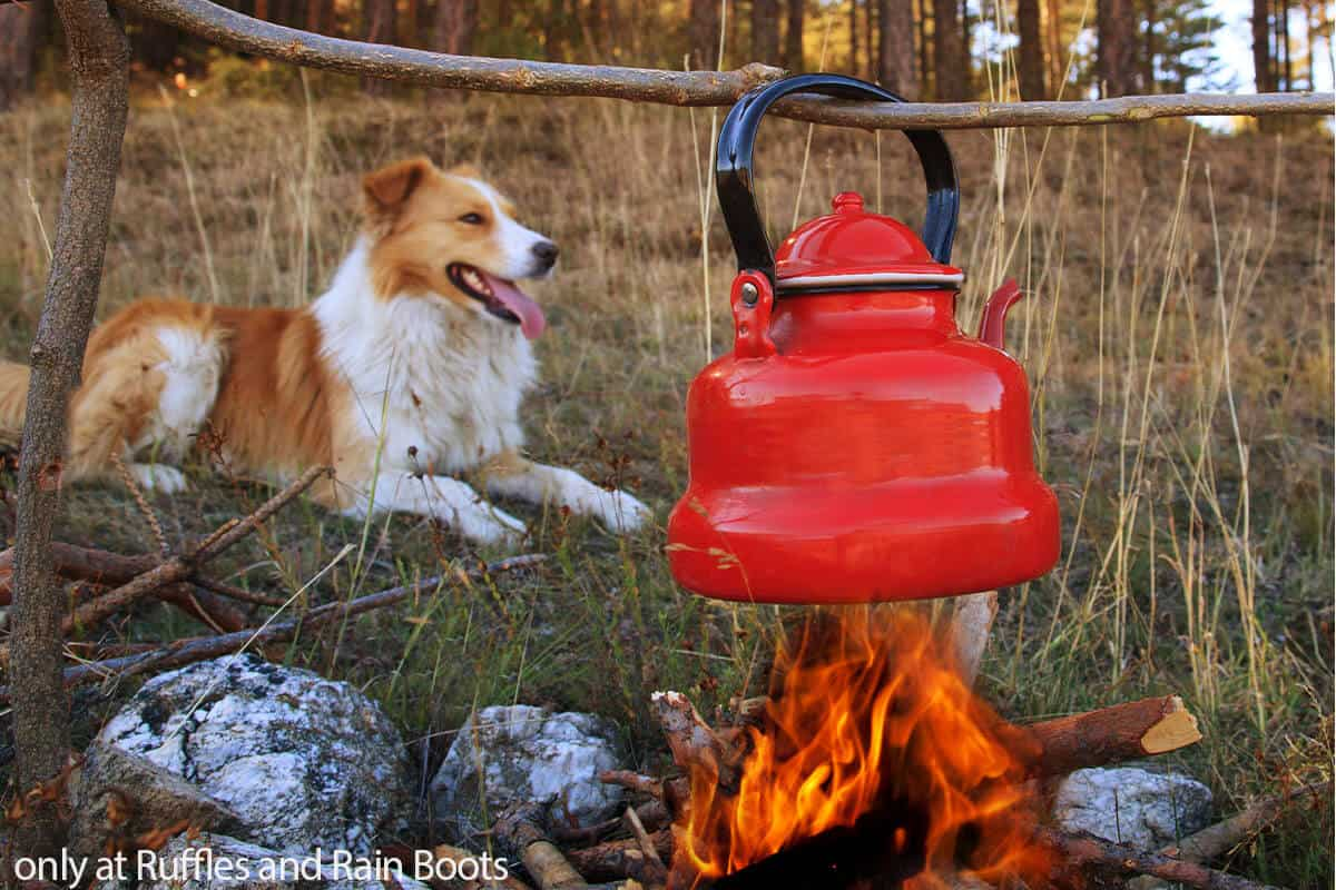 tips for first time dog camping trip