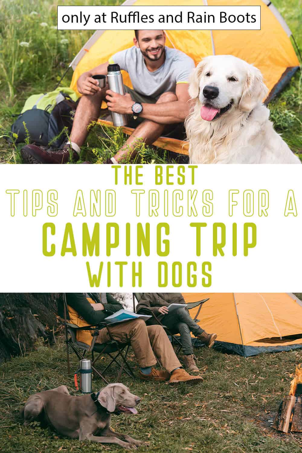 photo collage of hacks for camping with your dog with text which reads the best tips and tricks for a camping trip with dogs